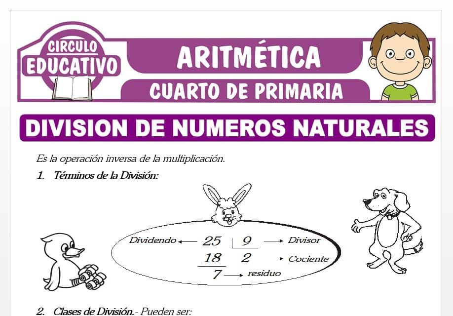 División de Números Naturales para Cuarto de Primaria