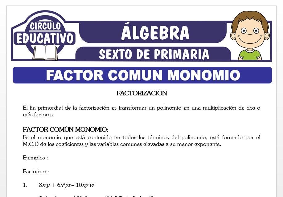 Ejercicios de Factor Comun Monomio para Sexto de Primaria