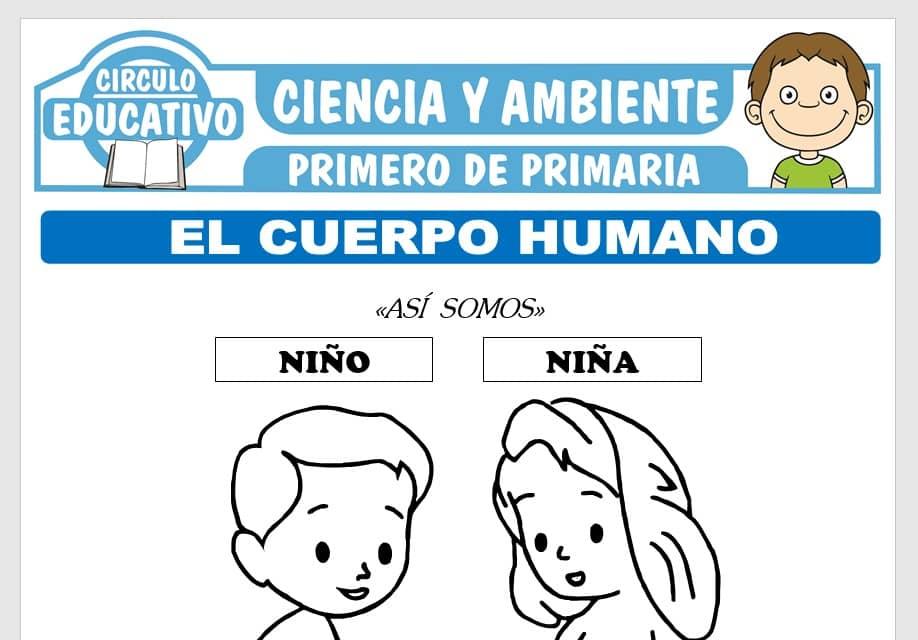 El Cuerpo Humano para Primero de Primaria