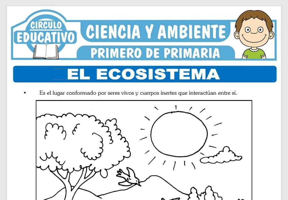 El Ecosistema para Primero de Primaria