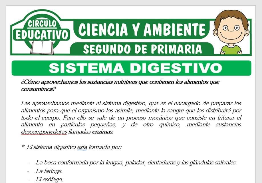 El Sistema Digestivo para Segundo de Primaria