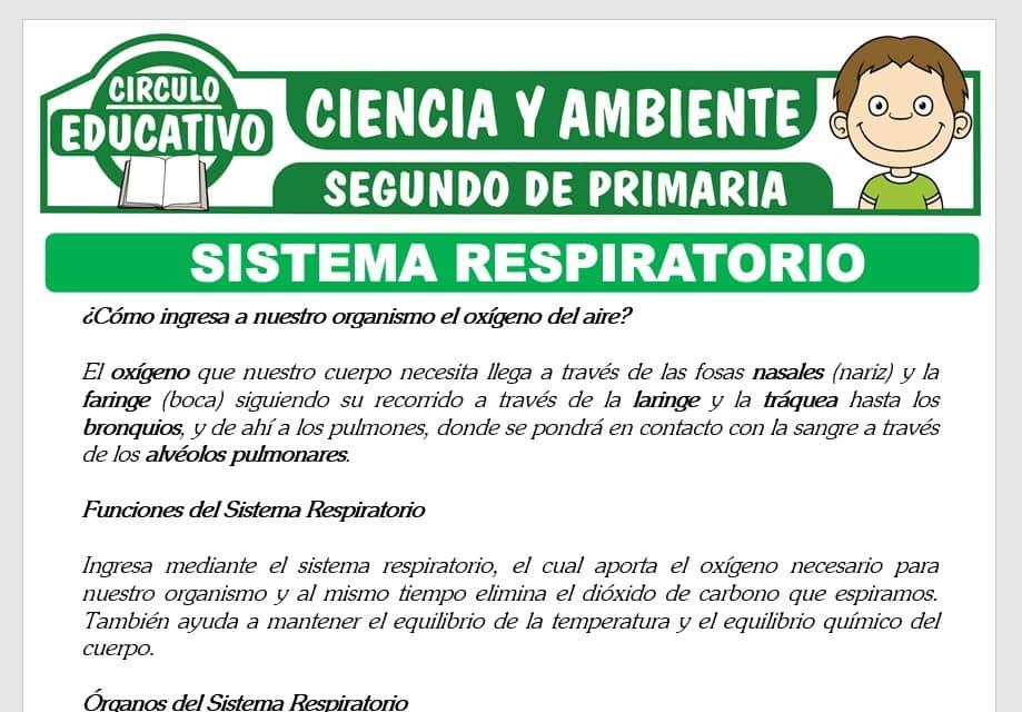 El Sistema Respiratorio para Segundo de Primaria