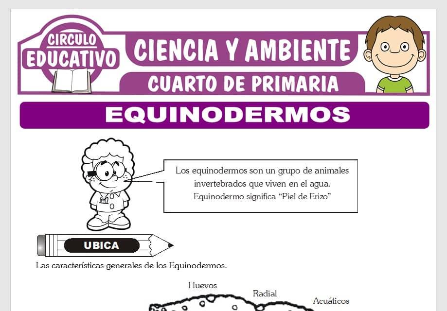 Equinodermos para Cuarto de Primaria