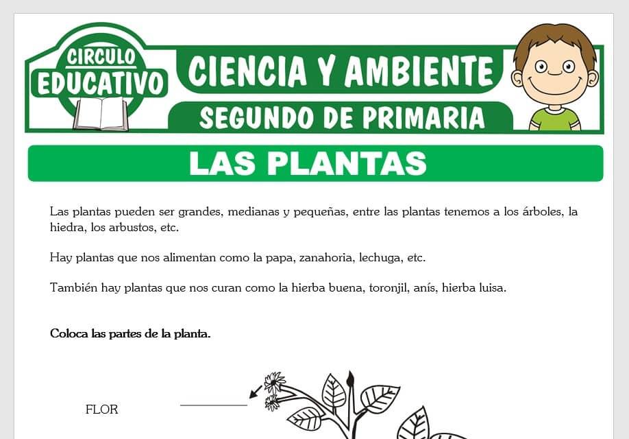 La Planta y sus Partes para Segundo de Primaria