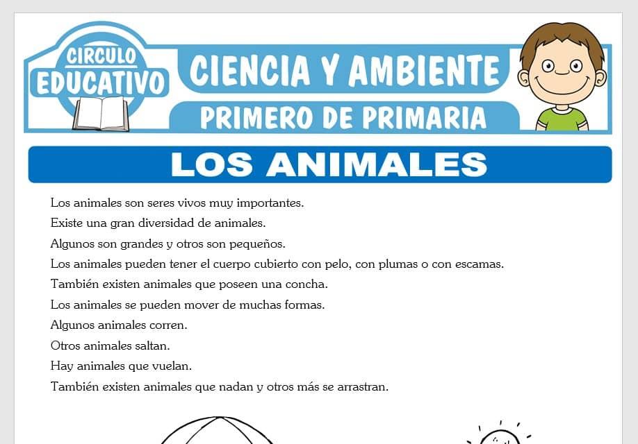 Los Animales para Primero de Primaria