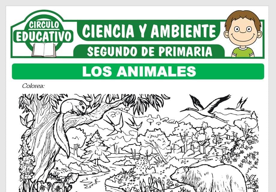 Los Animales y su Clasificación para Segundo de Primaria