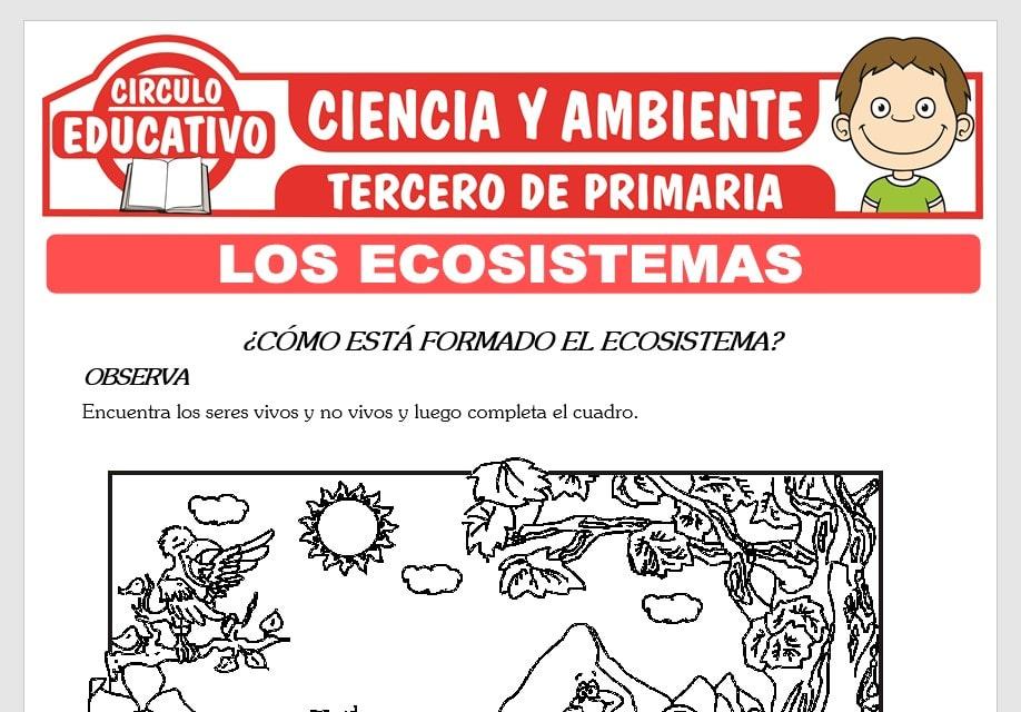 Los Ecosistemas para Tercero de Primaria