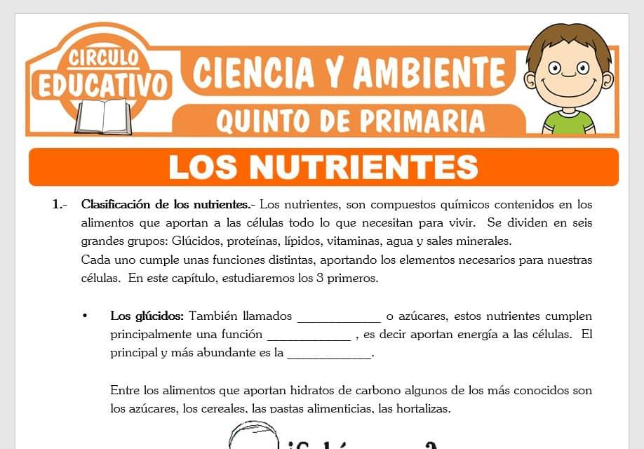 Los Nutrientes para Quinto de Primaria