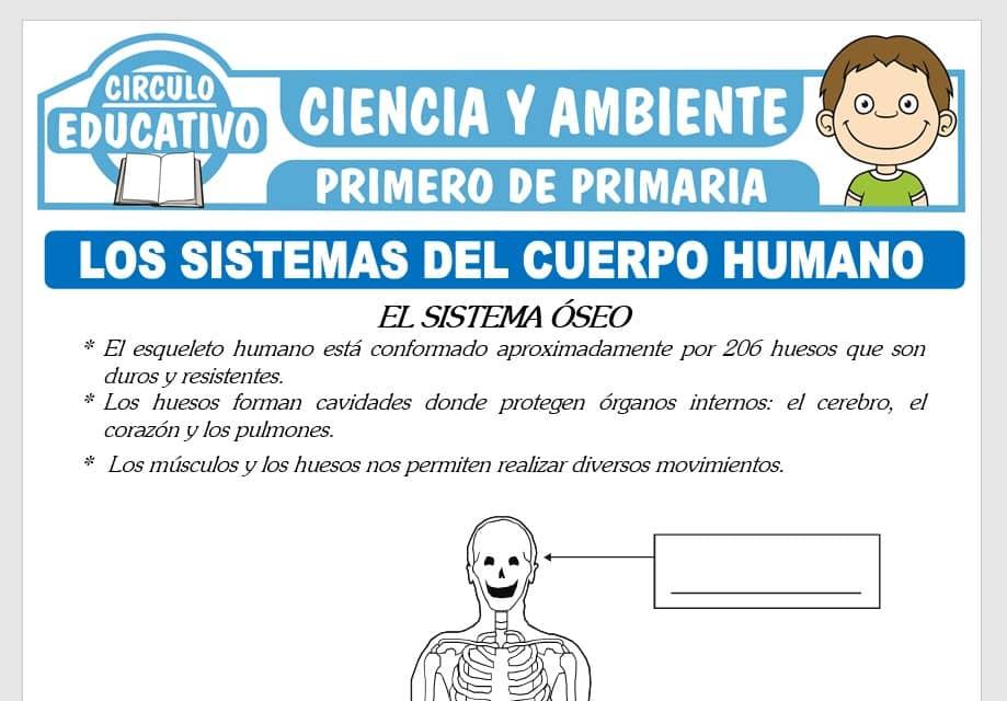LosSistemas del Cuerpo Humano para Primero de Primaria