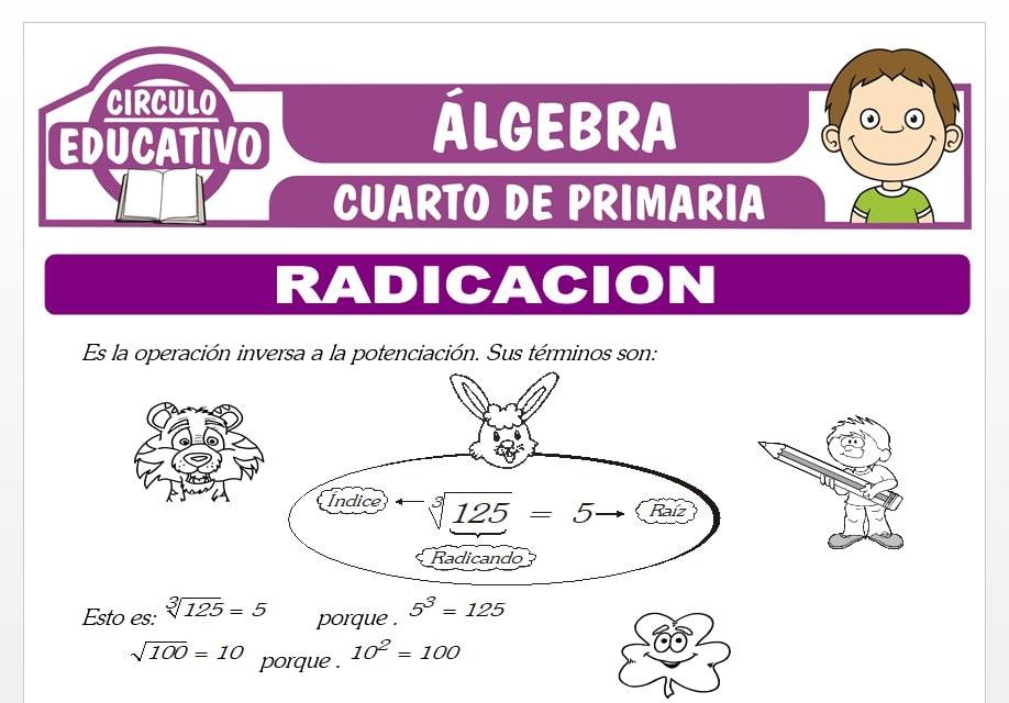 Radicación para Cuarto de Primaria