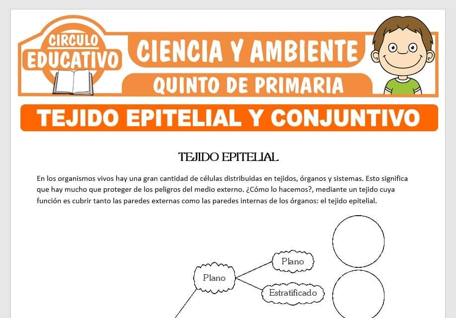 Tejido Epitelial y Conjuntivo para Quinto de Primaria