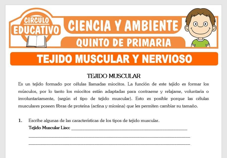 Tejido Múscular y Nervioso para Quinto de Primaria